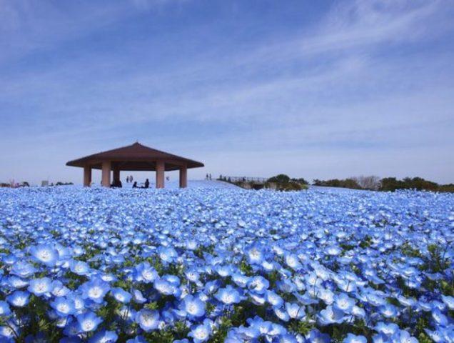 ゴールデンウィーク 旅行 おすすめ 国内 九州 安い 格安 穴場 カップル 人気 GW 激安