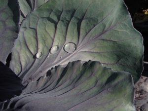 デトックススープ レシピ ミネストローネ 美味しい 地中海式スープ 地中海式ダイエット 作り方 材料 食材 おすすめ 排出 デトックス 痩せるスープ 成分 効能 カロリー 効果 人気 作り方 ダイエット 代謝 促進 具材 便秘解消 置き換え トマト セロリ